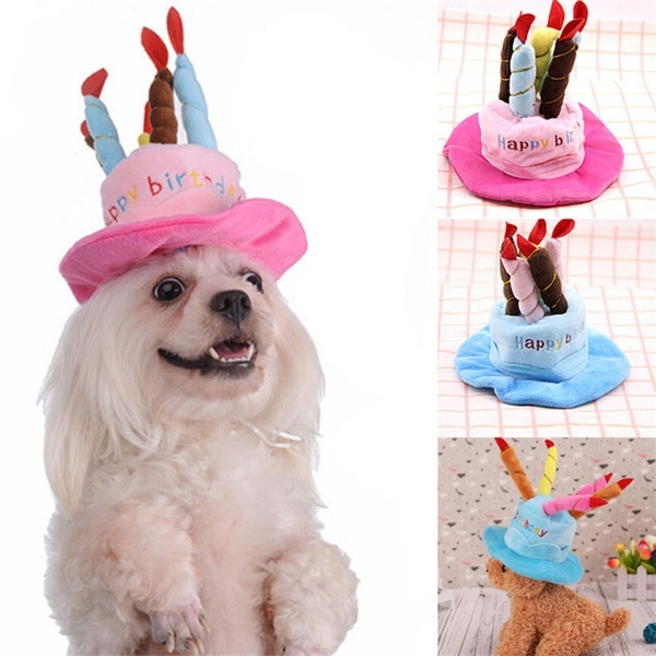 happybirthday, happybirthdayhat, capcat, Fashion