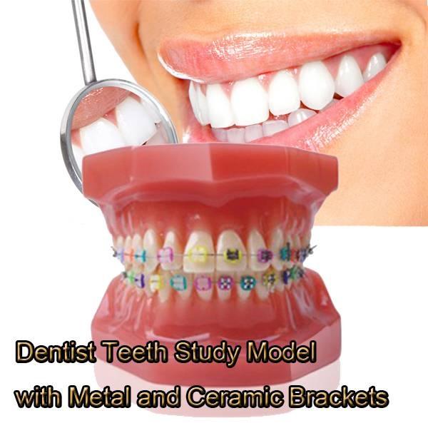 dentalteethmodel, dentalorthodontic, dentalstudy, dentalmaterial