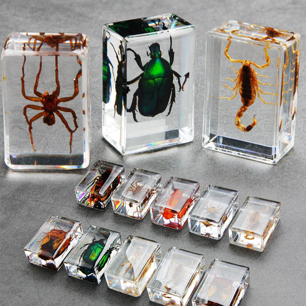amber, Collectibles, School, scorpion
