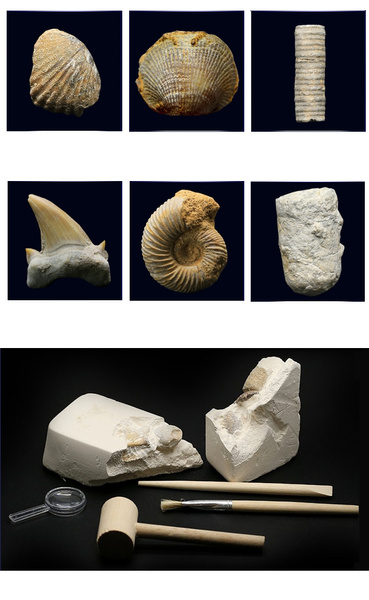 fossilforsale, Toy, realfossil, Fossil