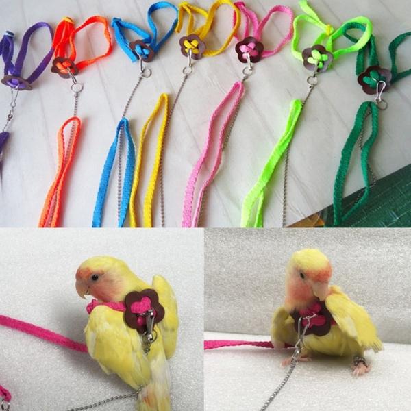 Harness, parrotharnes, parrotharnessandleash, Pets