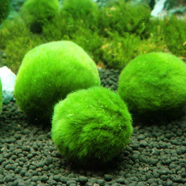 aquariumdecor, aquariumball, Tank, marimomossball