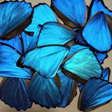 butterfly, bluebutterflywing, art, Jewelry