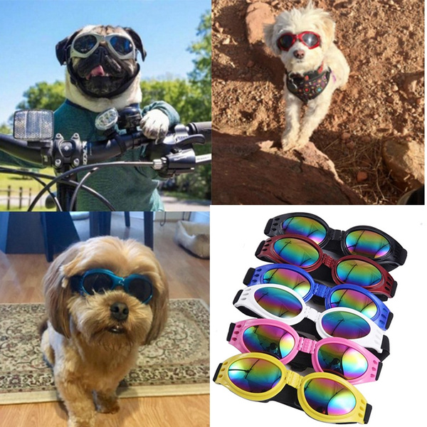 Outdoor Sunglasses, Outdoor, Fashion Accessories, Pets