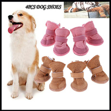 cute, Sneakers, puppy, Winter