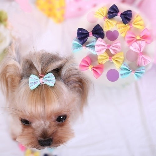 doghairbow, hair, petaccessorie, cute