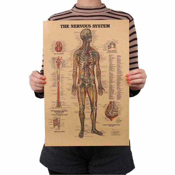 Decor, craftpaperposter, Skeleton, bodystructure