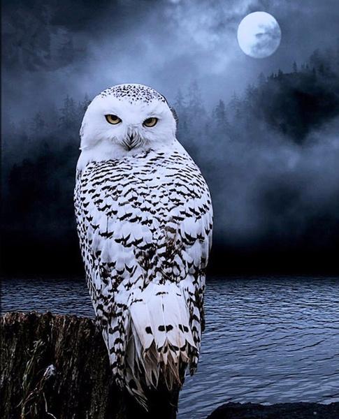 Owl, DIAMOND, Jewelry, diamondpainting