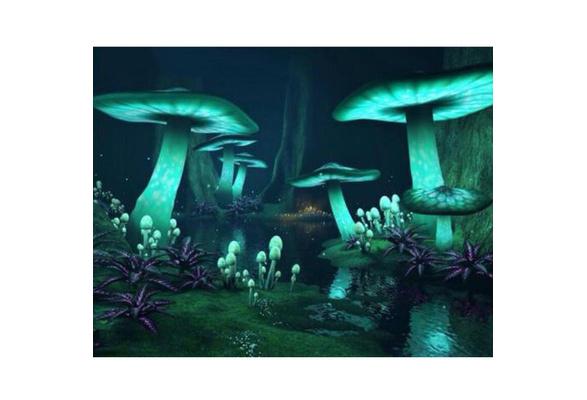 beiguoxia Fantasy Colorful Mushroom 5D Full Diamond Embroidery Painting Frameless Home DIY Craft Decor