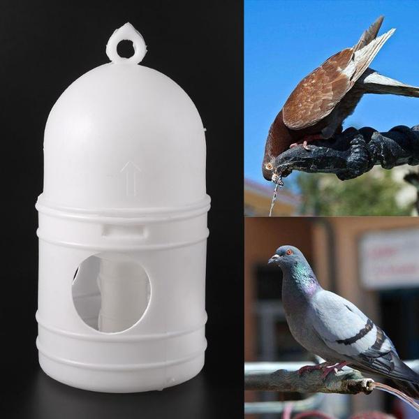 Container, birdbowl, parrotfood, Pets