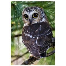 Owl, 5ddiamondembroidery, DIAMOND, Home Decor