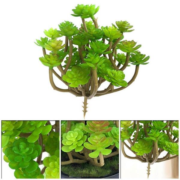 Plants, Garden, Pot, decoration