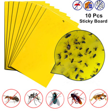 Summer, flykiller, insecttrap, mosquitokiller