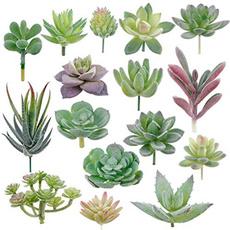 succulent, Plantas, Garden, Artificial