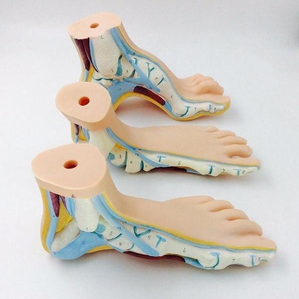 footmodel, School, medicalteaching, flatfoot