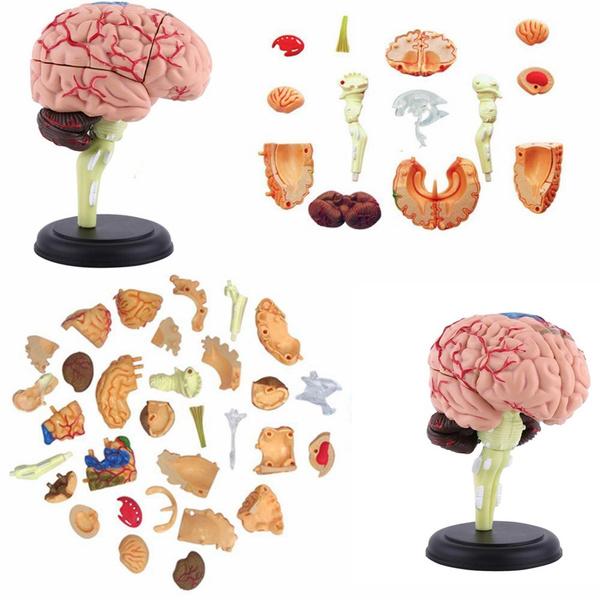 Skeleton, medicalteachingtool, Tool, medicalscience