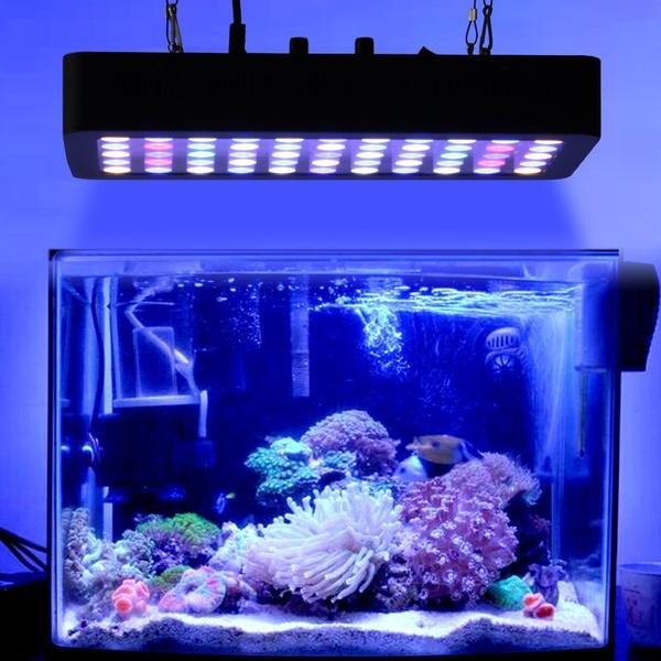 Lumiere cla60 bleu rouge utile ?  5c94ddd2f684f82aa8cf503c-large