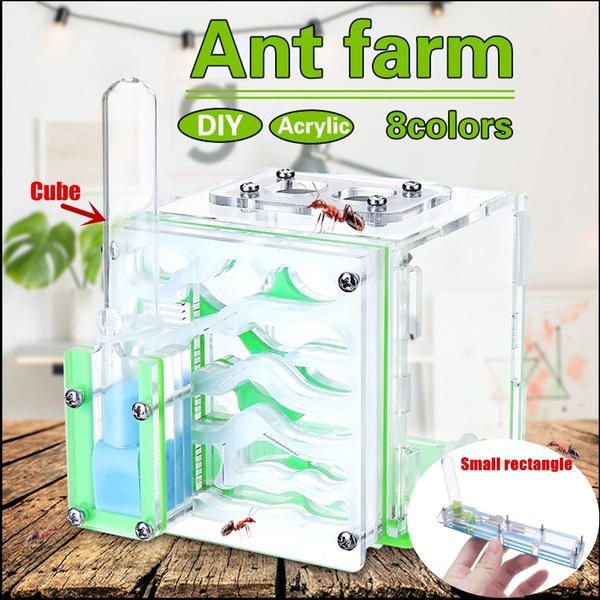 Farm, nest, livehouse, ant