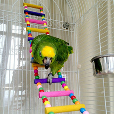 parrotladder, parrotsupplie, Computers, parrotstanding