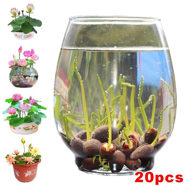 Bonsai, Summer, Flowers, Home Decor