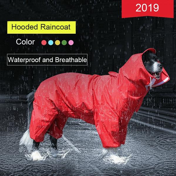 golden, Outdoor, raincoat, Pets