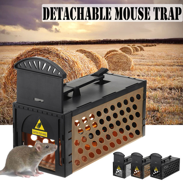 housekeeping, mousecatcher, rodenttrap, Tool