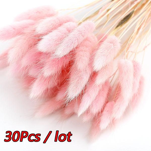 driedpampasgra, phragmitescommuni, Home Decor, foxtailbouquet
