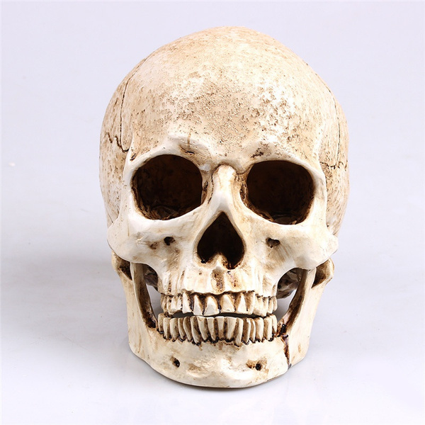 Head, humanskullreplica, humanhead, Home Decor