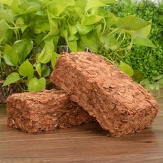 plantssoil, coconut, organic, Garden