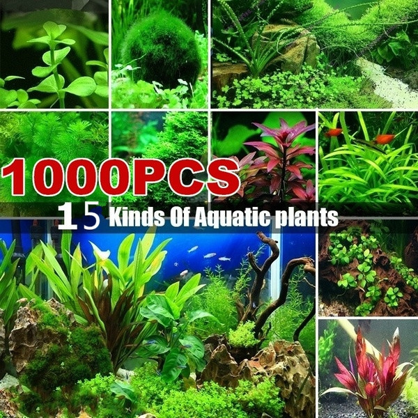 aquaticplantseed, aquariumdecor, Plants, Tank