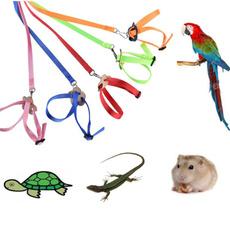 Turtle, birdleash, lizardtractionrope, petaccessorie