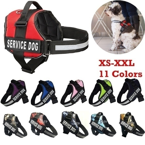 Training, New arrival, Pets, Pet Products