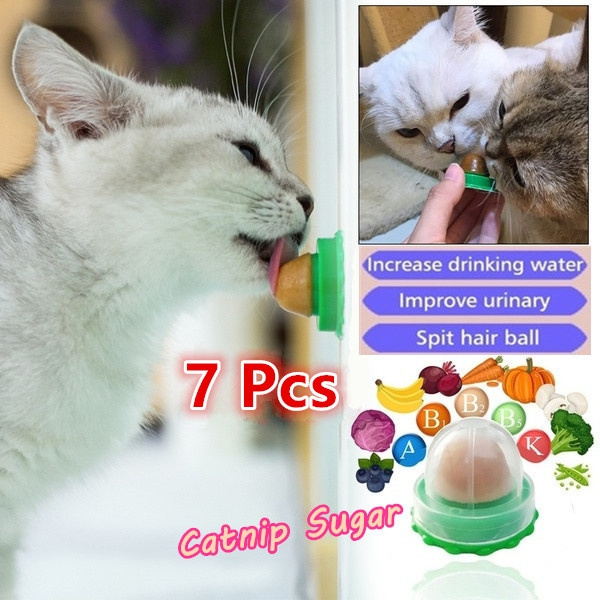 Funny, cattoy, Snacks, Food