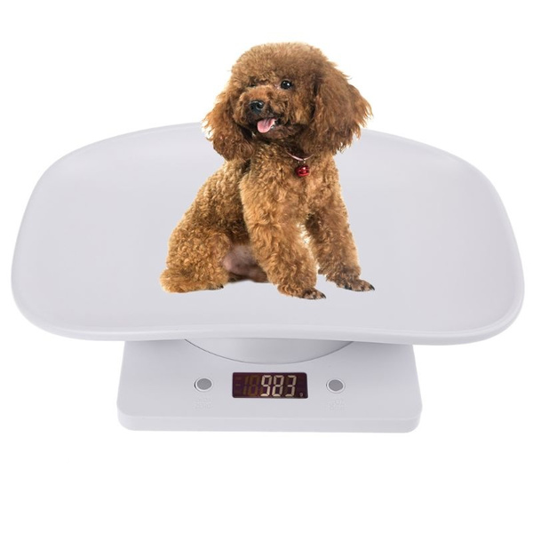 Scales, Pets, kitchengadget, Cats