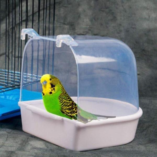 Box, Bathing, Parrot, Pets