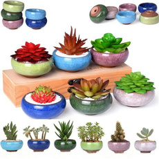 Plants, succulentpotsanimal, Pot, Indoor