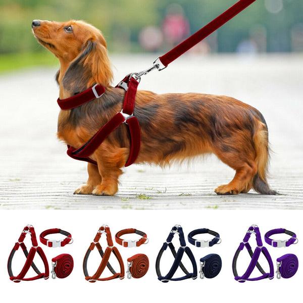 Harness, Fashion Accessory, Adjustable, mediumdog