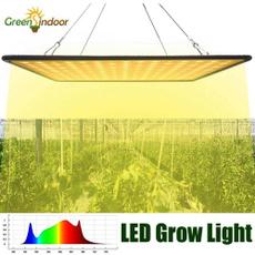 Plants, growlamp, led, lights