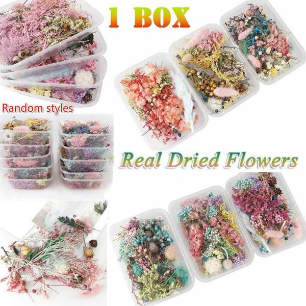 Box, Flowers, Jewelry, dryplant