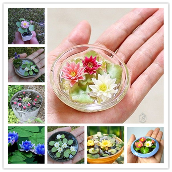 20 Pcs Bag Lotus Flower Mini Lotus Bonsai Aquatic Plants Bowl Lotus Water Lily Flores Perennial Plant For Home Garden Decorat Wish