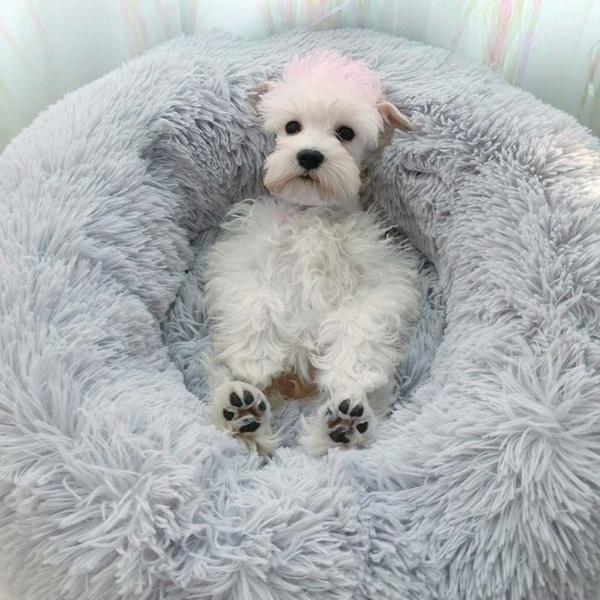 catwarmbed, puppy, Plush, Winter
