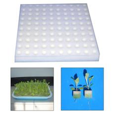 Home & Kitchen, Plants, nurseryspongeblock, Garden