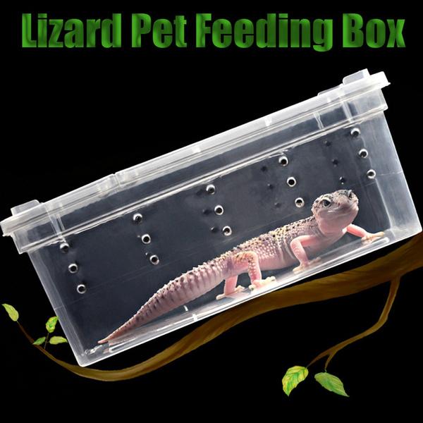 cage, Box, livinghouse, Feeding