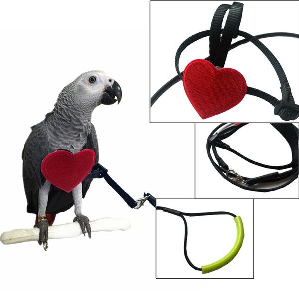 leashforbudgie, birdleash, Outdoor, birdharnes