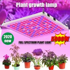 Plants, Garden, pflanzen, hydroponic