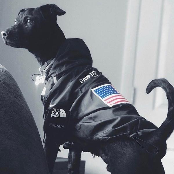 Outdoor, Waterproof, national, Dogs