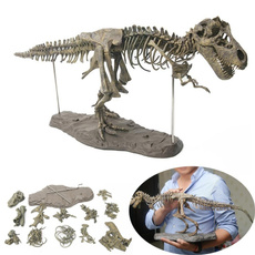 Toy, Skeleton, skull, Science