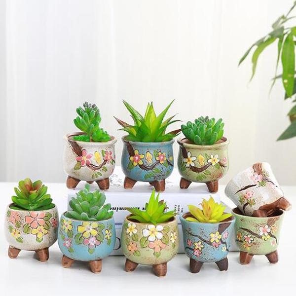 Bonsai, succulent, Plants, Flowers