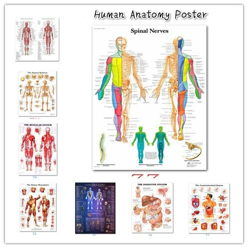 medicinedecorativepainting, humananatomyposter, skeletalmuscleteachingpicture, skeletalmuscleteaching