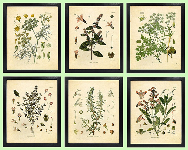 Mint, Wall Art, thyme, painting